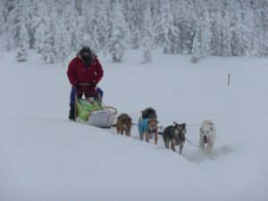 Lappland-Hundeschlittentour