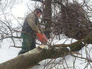 Ausholzen für Naturschutzverein