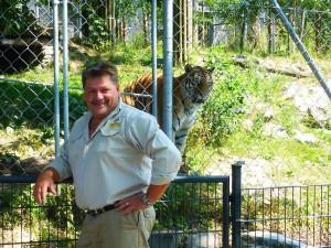 Tiger Viktor hat sich gut eingewöhnt
